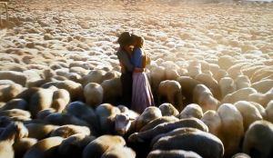 Sheep Farmer 6