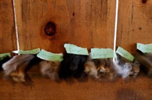 Wool samples, taken after each sheep is sheared, line the barn wall on shearing day at Peggy and Todd Allen's Savage Hart Farm on Saturday, March 25, 2017, in Hartford, Vt.