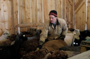 Todd Allen, who runs Savage Hart Farm with his wife Peggy, prepares a sheep for shearing on Saturday, March 25, 2017, in Hartford, Vt.